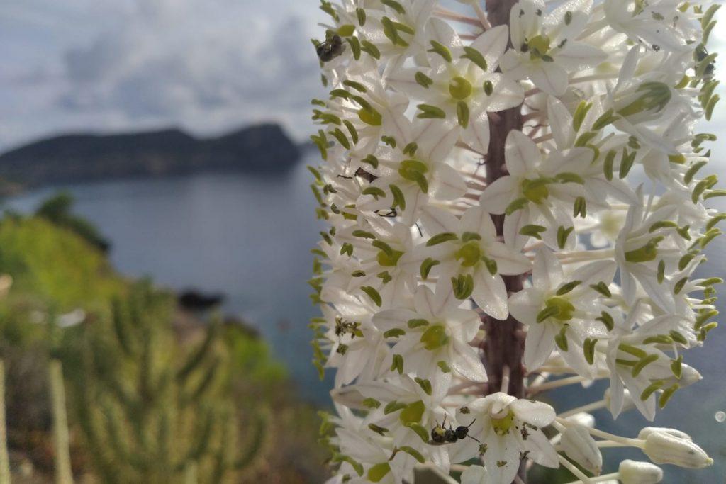 polinización de flores